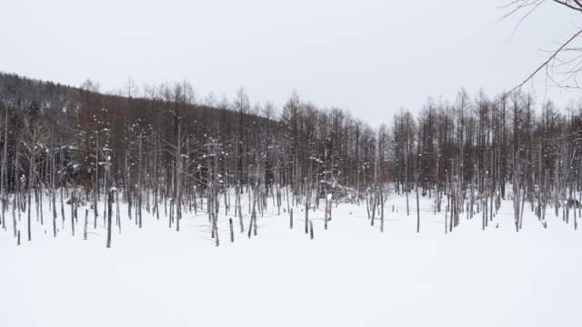 winter woodland landscape in hokkaido, wide - kamikawa subprefecture stock videos and b-roll footage