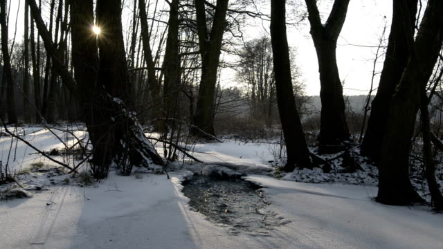 wintry creek - alder tree stock videos & royalty-free footage
