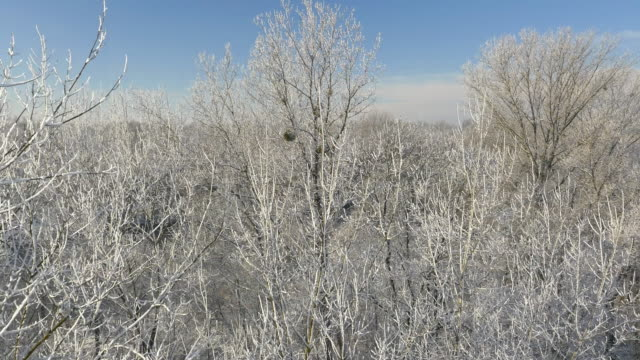 aerial wintry forest surrounding the river - prekmurje stock videos & royalty-free footage