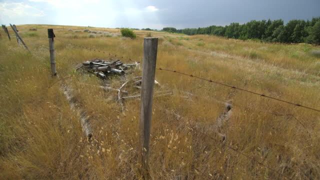 wire fence in brown field - wiese video stock e b–roll