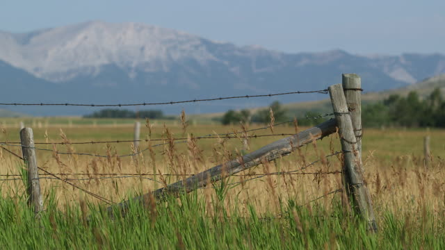 wire fence with mountain backdrop. - wiese stock videos & royalty-free footage