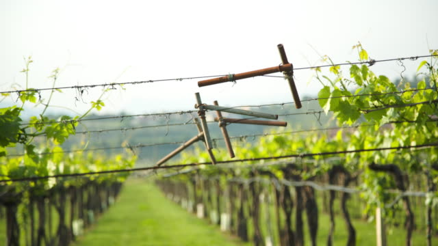 vídeos y material grabado en eventos de stock de wire system of a vineyard. - hoja de la vid