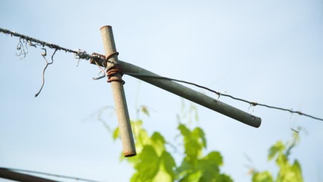 vídeos y material grabado en eventos de stock de wire system of a vineyard. - grape leaf