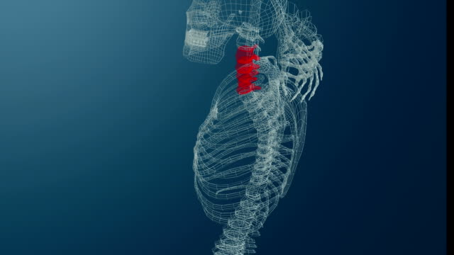 wireframe 3d animation of skeleton with neck pain. blue background. - human spine stock videos & royalty-free footage