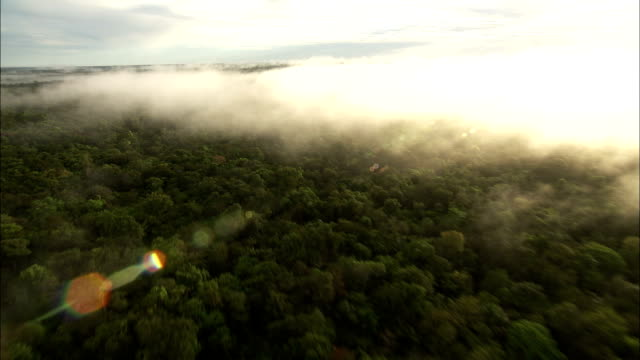 Wispy clouds drift above the Amazon Rainforest. Available in HD.
