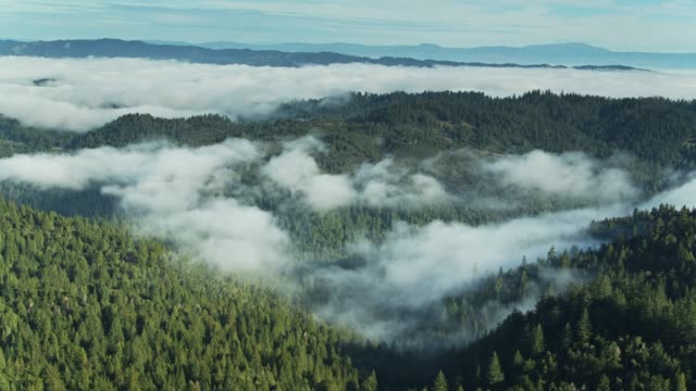 Wispy Mist and Dense Fog Bank Rolling Over Russian River Valley Forests