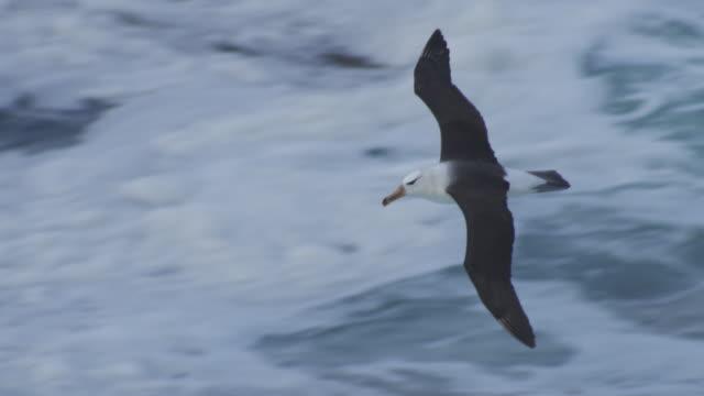 ha pan with blackbrowed albatross gliding over open sea - albatross stock videos & royalty-free footage