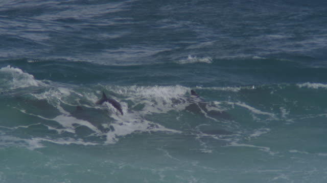 PAN with Bottlenosed Dolphin swimming through breaking waves