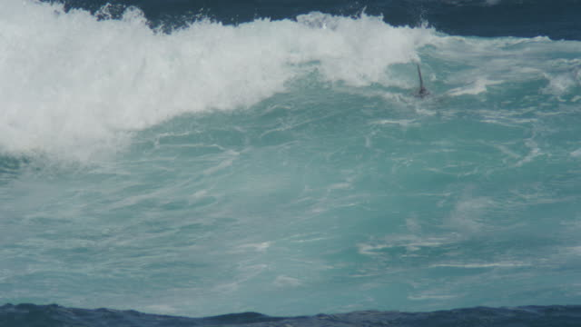 PAN with Bottlenosed Dolphins riding waves and playing in surf