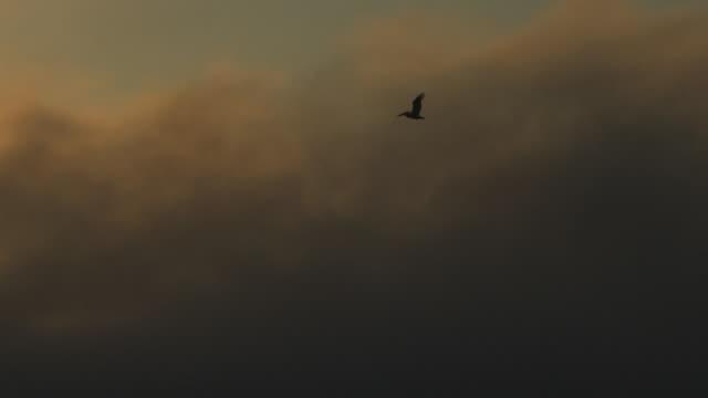 vídeos de stock e filmes b-roll de ws pan with brown pelican flying with thick fog and sunset in background - nevoeiro