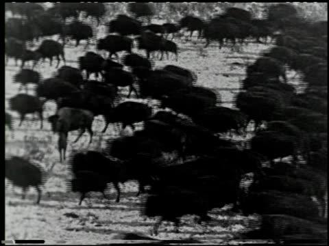 with buffalo bill on the u.p. trail - 2 of 9 - andere clips dieser aufnahmen anzeigen 2526 stock-videos und b-roll-filmmaterial