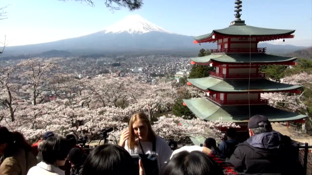 With cherry trees in full bloom beside a vermilionlacquered fivestory pagoda and snowcapped Mount Fuji as a backdrop it's no wonder tourists are...