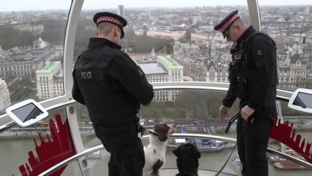 with chinese new year approaching a couple of trainee police dogs from the city of london police ride the london eye in celebration of the year of... - conceptual symbol stock videos and b-roll footage
