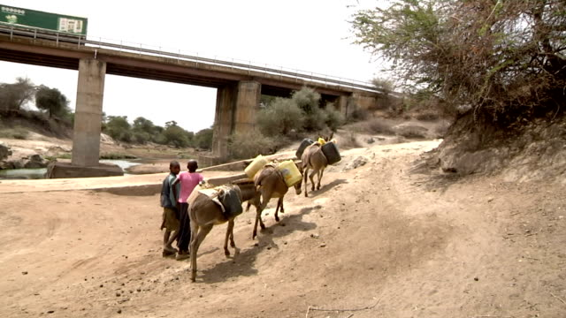 vídeos y material grabado en eventos de stock de with donkeys loaded with water gallons boy and girl lead donkeys form driedup river bed on july 28 2011 in road from garisa to dadaab kenya - galón