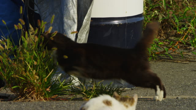 vídeos de stock, filmes e b-roll de ms pan with feral domestic cat getting agitated then attacking second cat around tarpaulin - espreitando