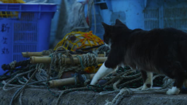 PAN with feral domestic cat walking from camera along edge of dockside