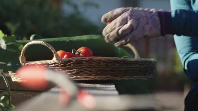 vídeos y material grabado en eventos de stock de a con jardinería guantes mujer lugares un tomate en una cesta llena con otras verduras en un día soleado - huerto