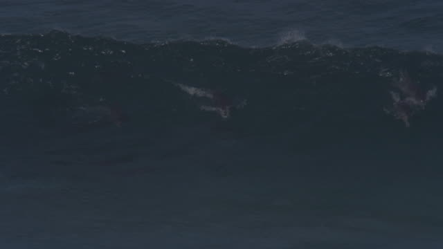 PAN with group of Bottlenosed Dolphins swimming through waves and surfing visible underwater