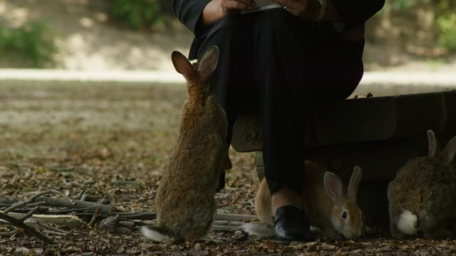 TU with group of feral domestic rabbits standing to be fed by Japanese lady