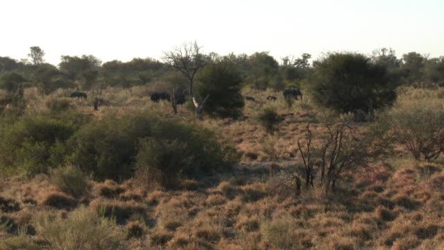 ha pan with herd of african elephants walking through long vegetation - bush stock videos & royalty-free footage
