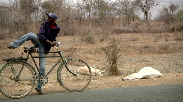 with his bicycle Man walking by dead cows on July 29 2011 in Road from Garissa to Dadaab Kenya