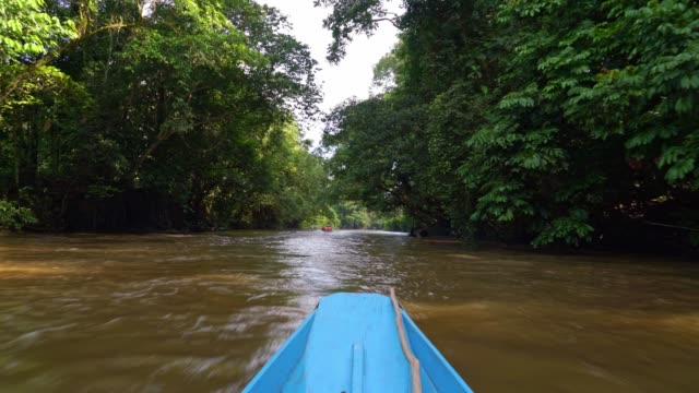 with long boat on melinau river throe rainforest - borneo - kayak stock videos & royalty-free footage