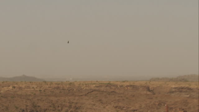 ws td with peregrine falcon diving at prey over houses in jodhpur - wanderfalke stock-videos und b-roll-filmmaterial
