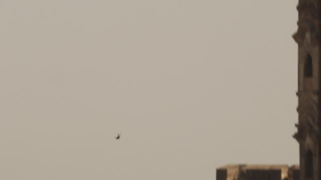 ws td with peregrine falcon diving vertically at prey by fort in jodhpur - wanderfalke stock-videos und b-roll-filmmaterial