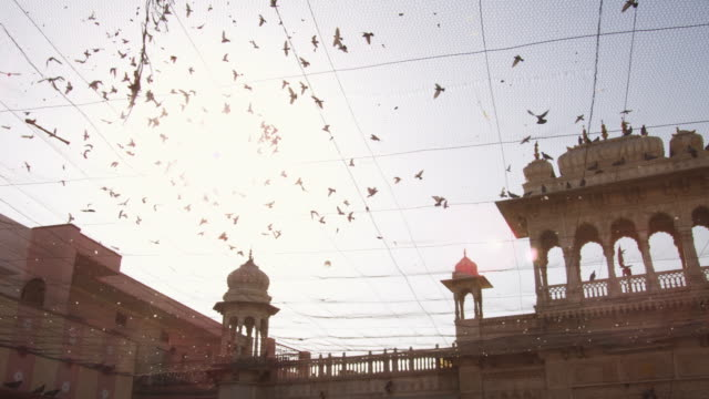 PAN with pigeon flock flying over courtyard of Karni Mata temple