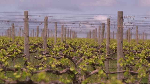 with record breaking hot weather tipped to become the new normal in australian the world's fourthlargest wine exporter by value the government and... - record breaking stock videos & royalty-free footage