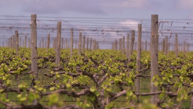 with record breaking hot weather tipped to become the new normal in australian the world's fourth largest wine exporter by value the government and... - record breaking stock videos & royalty-free footage