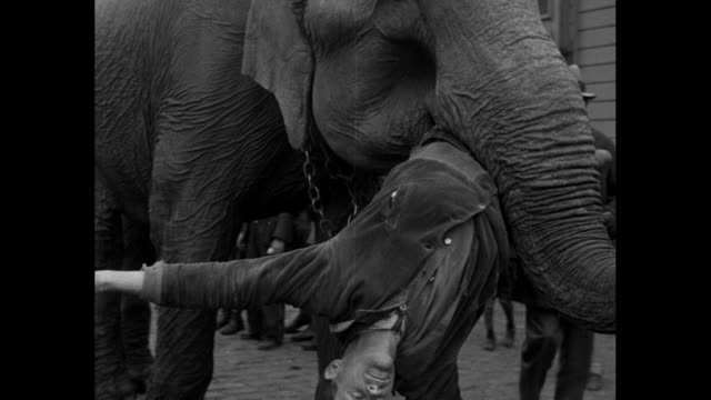 "vídeos de stock e filmes b-roll de with ""ringling bros barnum & bailey"" circus train at left, an elephant walks forward holding outstretched man in its mouth; as young boys look on, it... - circo"