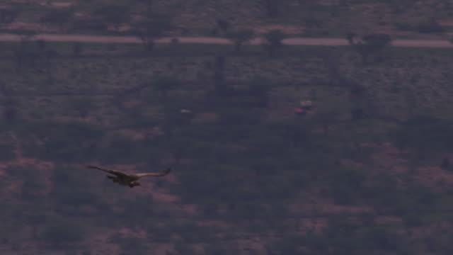 vidéos et rushes de ha pan with ruppells vulture gliding over wooded savannah and villages - 50 secondes et plus