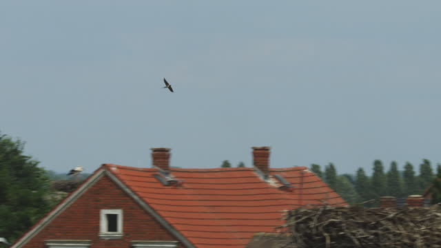 pan with swallow flying fast over rooftops with white stork nests - panning video stock e b–roll