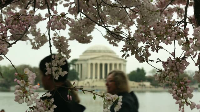 with the thomas jefferson memorial is seen in the background, visitors enjoy the cherry blossoms at the tidal basin. washington, dc. april 10, 2015.... - thomas jefferson stock videos & royalty-free footage