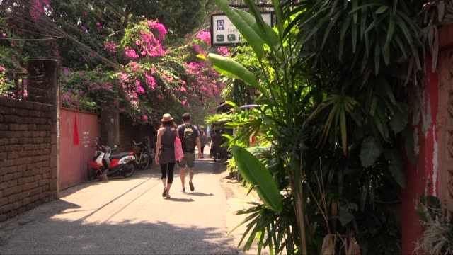 vídeos de stock, filmes e b-roll de with tourist couple walking under bougainvillea bush spreading over wall - arbusto tropical