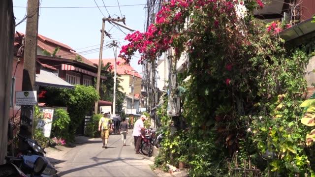 vídeos de stock, filmes e b-roll de with tourist in hat and bougainvillea bush spreading over wall - arbusto tropical