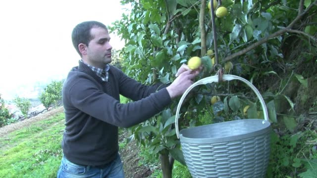 with unemployment on the up many portuguese are turning to their hands to agriculture guimaraes portugal - traditionally portuguese stock videos and b-roll footage