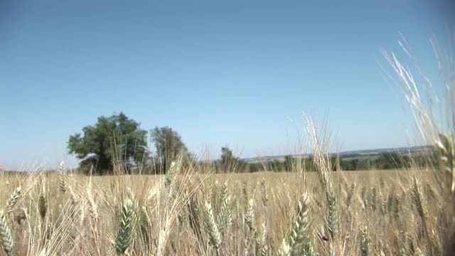with waves of hot weather sweeping across france, some parts of the country have been sweating under severe water restrictions and the country's... - landwirtschaftsminister stock-videos und b-roll-filmmaterial