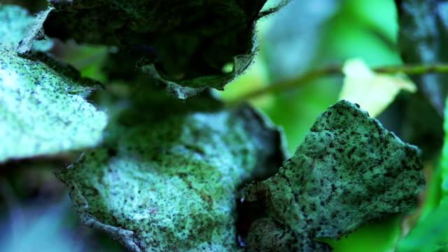 vídeos de stock, filmes e b-roll de withered folhas - deteriorado