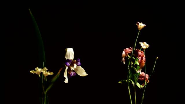 vídeos y material grabado en eventos de stock de flores marchitos - muerte