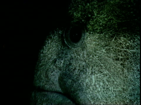 A wolf eel opens and closes its mouth a little.