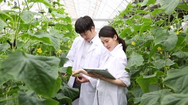 vídeos de stock, filmes e b-roll de a woman and a man researcher checking a growth of vegetables in the lab - amostra científica