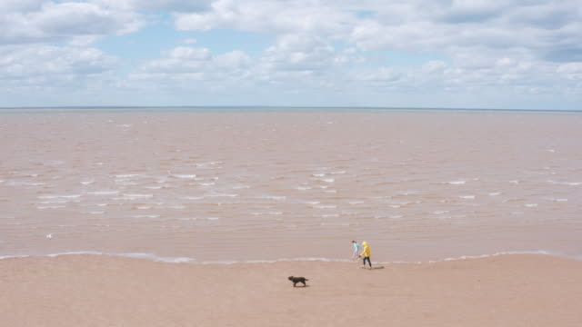 woman and daughter walking their pet dog on the beach - sand stock videos & royalty-free footage