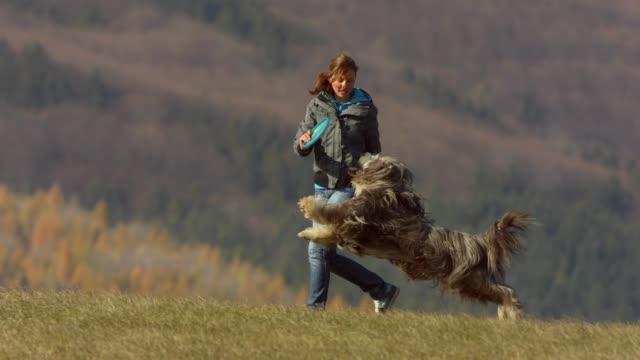 vídeos de stock, filmes e b-roll de mulher e cão que jogam com disco plástico - jeans