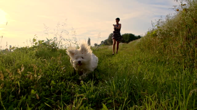 SLO MO mulher e cão correr na grama
