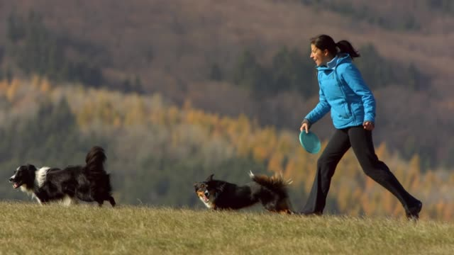 woman and dogs playing with plastic disk - one mid adult woman only stock videos & royalty-free footage