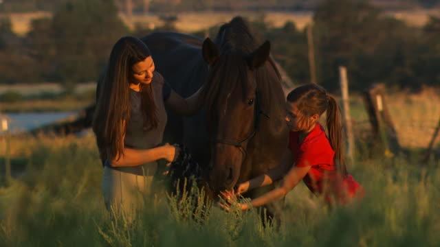 woman and girl feeding a horse - see other clips from this shoot 1139 stock videos & royalty-free footage