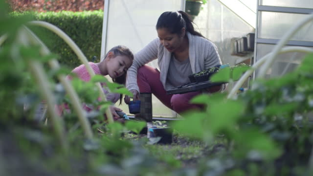 woman and girl gardening - digging stock videos & royalty-free footage