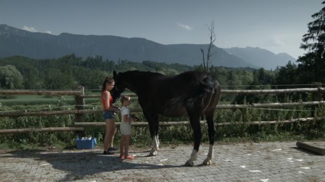 vídeos de stock, filmes e b-roll de woman and girl grooming horse outdoors - short curto